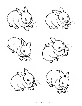 Bunny Rabbit Templates Teachers Printable